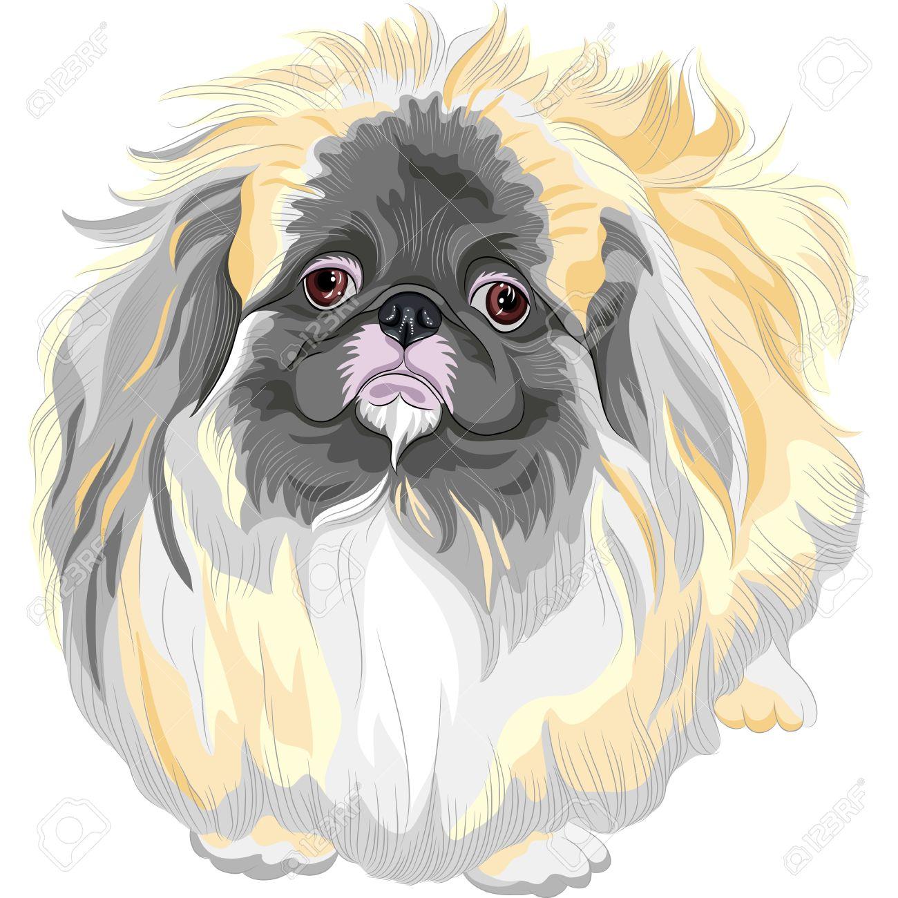 color sketch sad Sable Pekingese dog  Lion-Dog, Pekingese Lion-Dog, Pelchie Dog, or Peke Stock Vector - 17675833