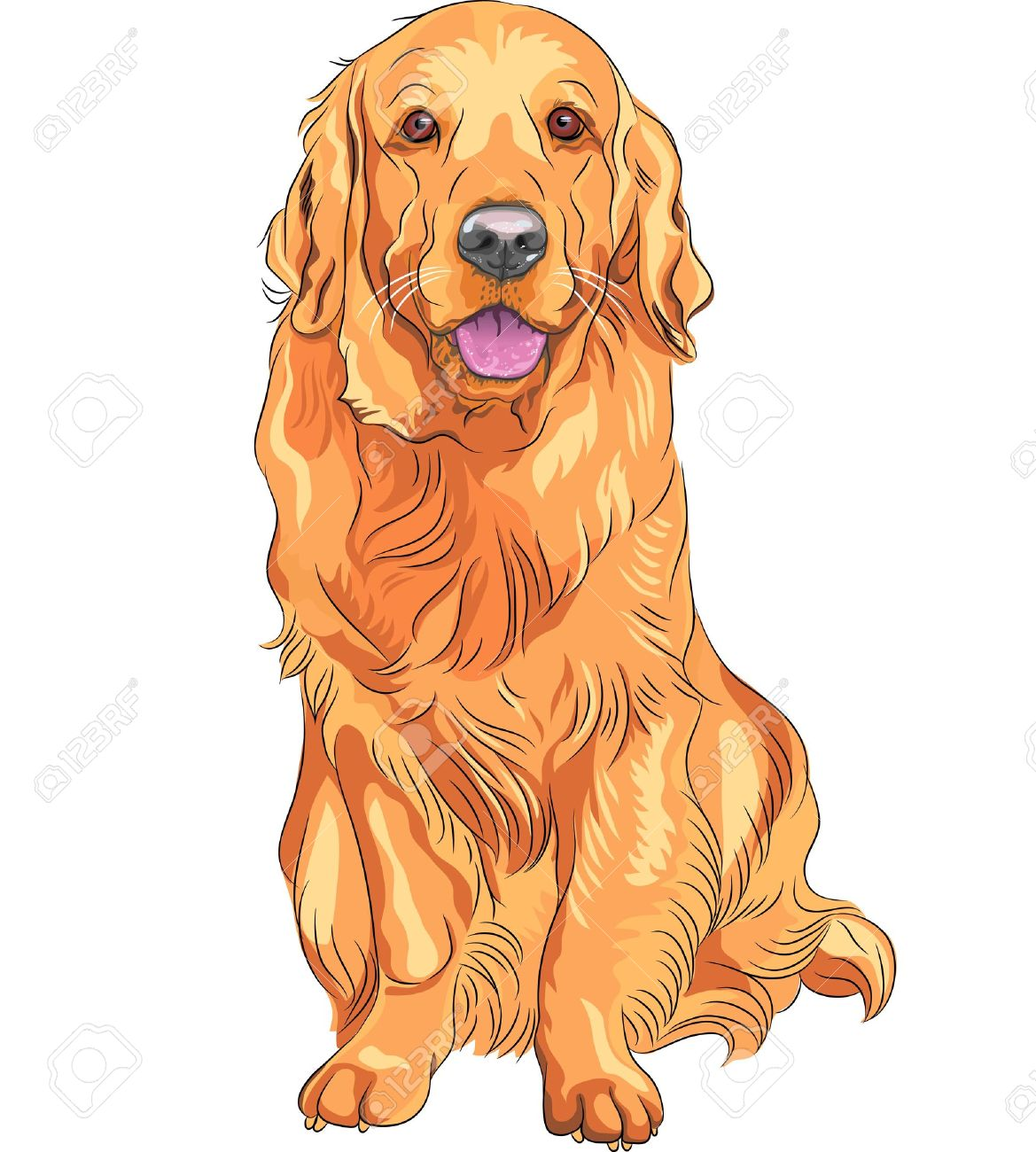 赤い笑顔のクローズ アップの肖像画銃犬の品種ゴールデンレトリバーが