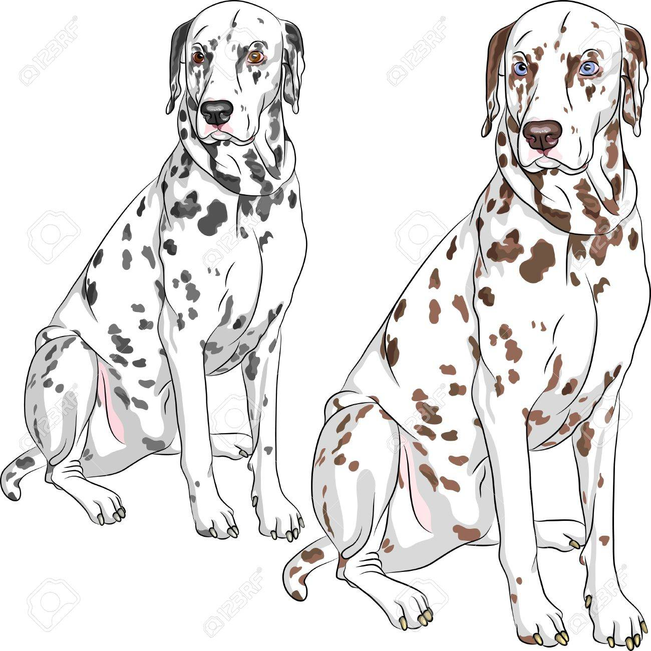 Sketch of the cheerful serious dog Dalmatian breed two different color, one - with black spots and brown eyes, the second - with brown spots and blue eyes Stock Vector - 18083885