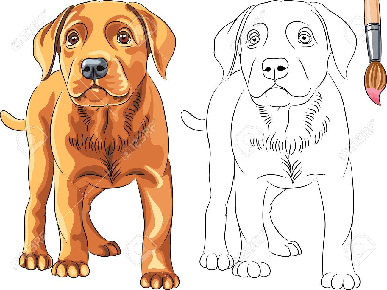 Coloring Book for Children of funny serious Puppy dog Labrador Retriever breed Stock Vector - 18083881