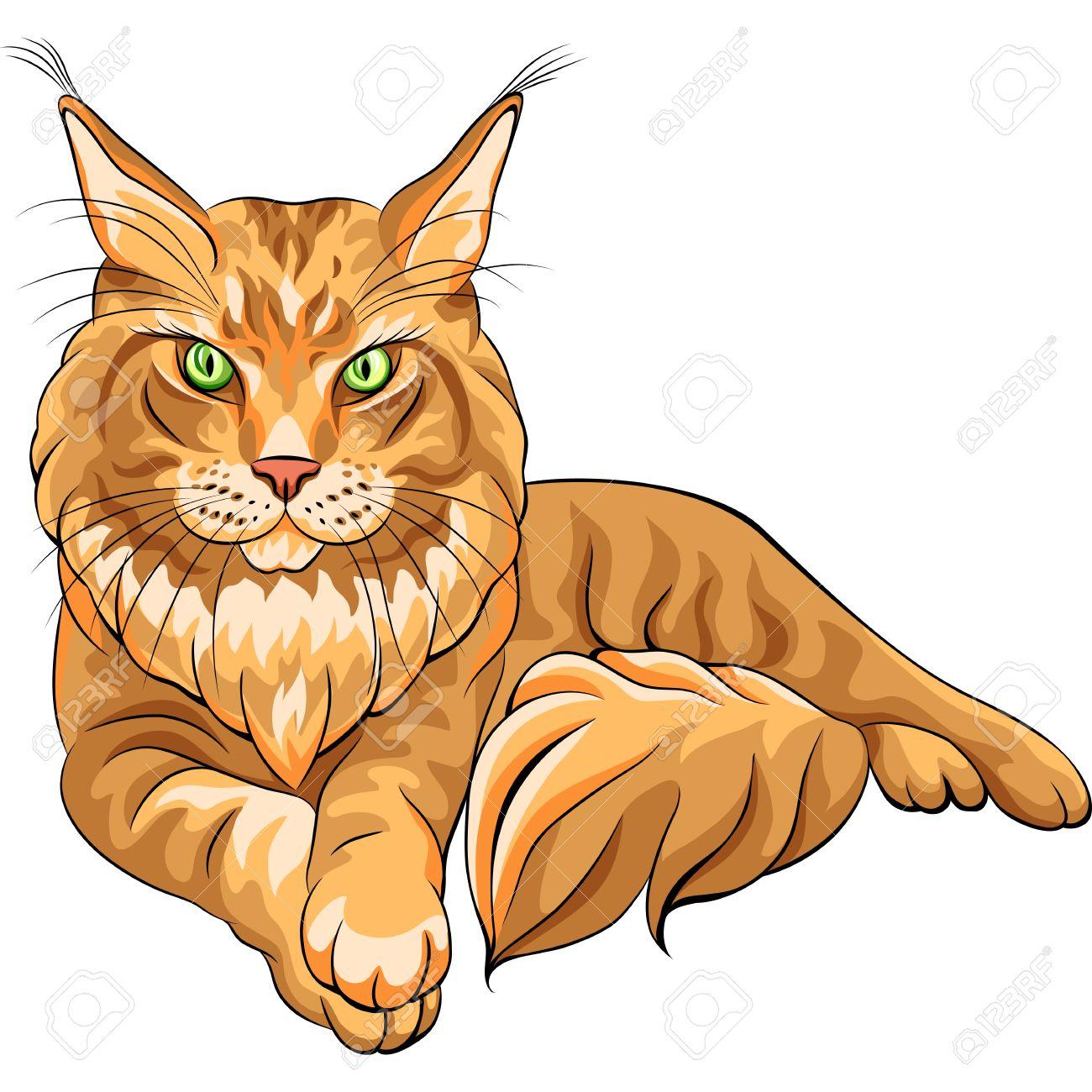 Vecteur de couleur croquis grave rouge moelleux Maine Coon américain Longhair chat couché Banque d