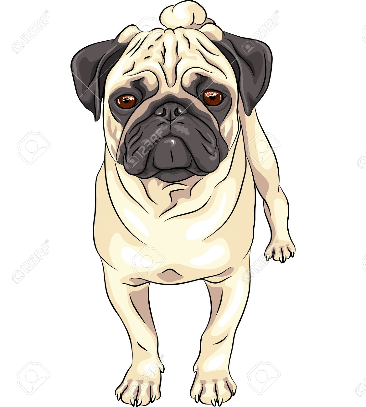 color sketch cute serious dog fawn pug breed stock vector 20987624