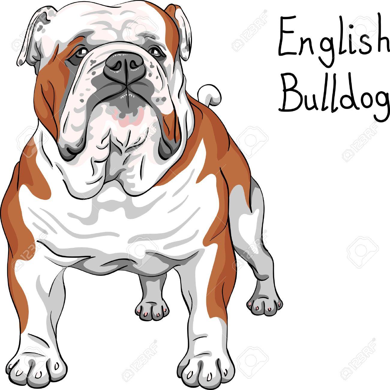 Bulldog graphics pictures