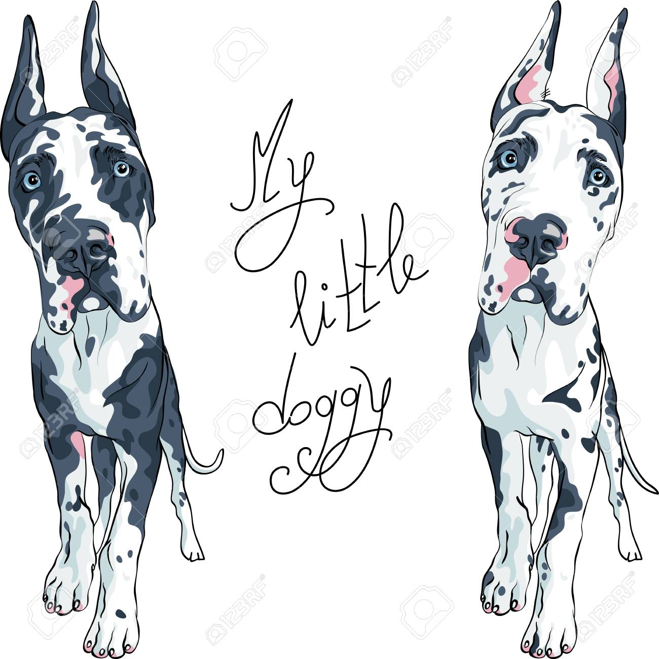 Vector Spotted Dog Harlequin Great Dane Puppy With Cropped Ears Royalty Free Cliparts Vectors And Stock Illustration Image 121119874