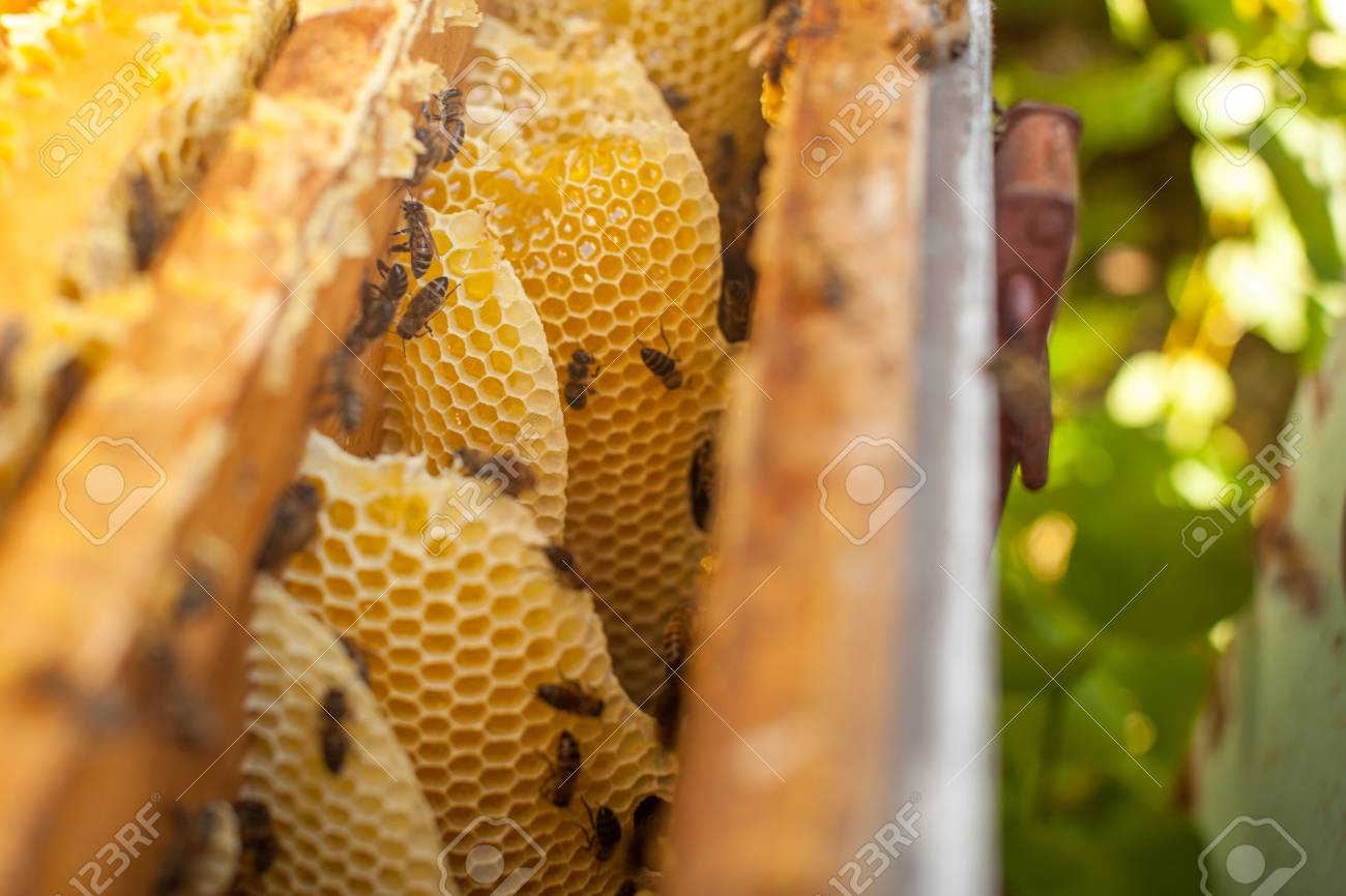 Honeycomb, Beehive Frame, Raw Honeycomb Frame With Honey Stock Photo ...