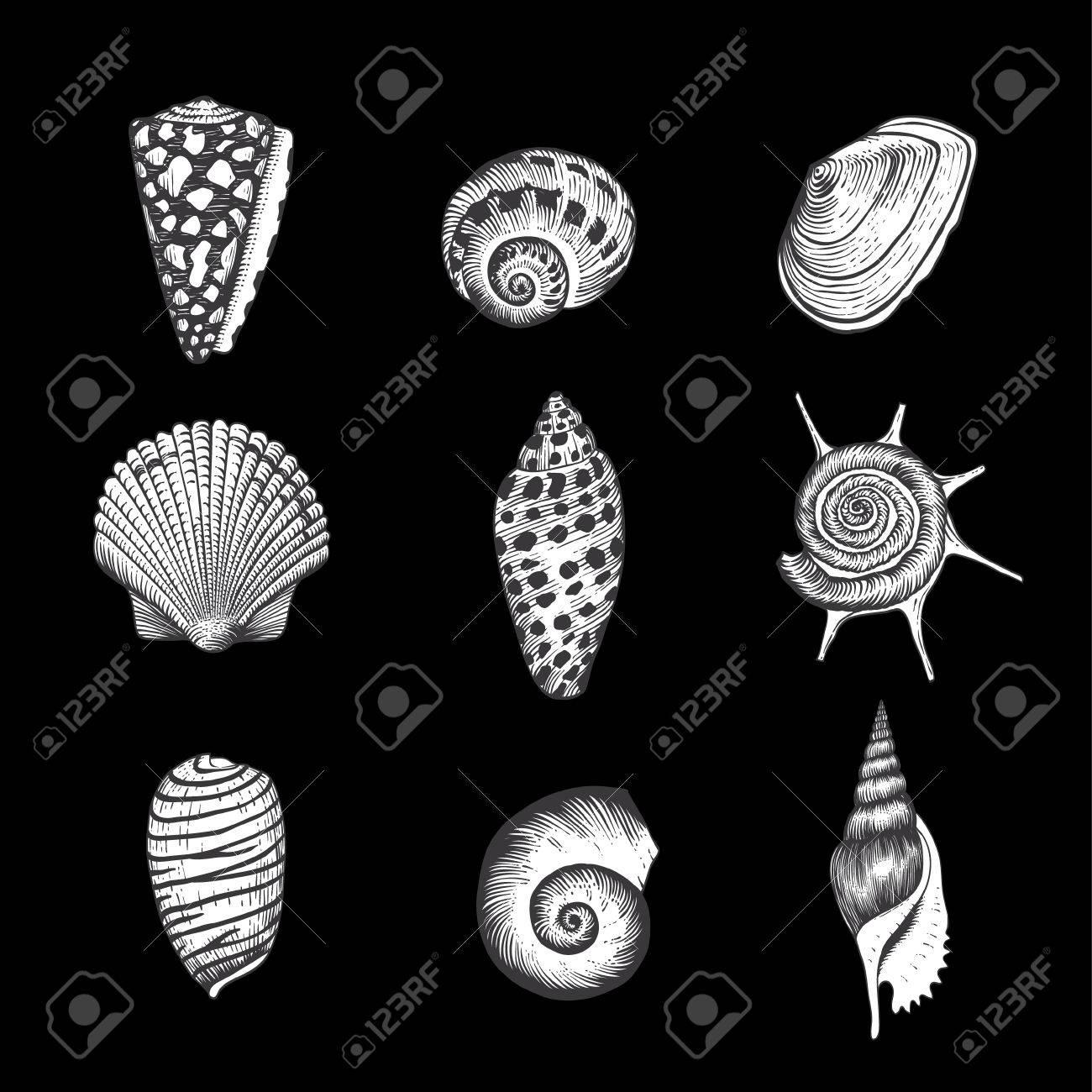 Set of vector vintage seashells nine black and white illustrations