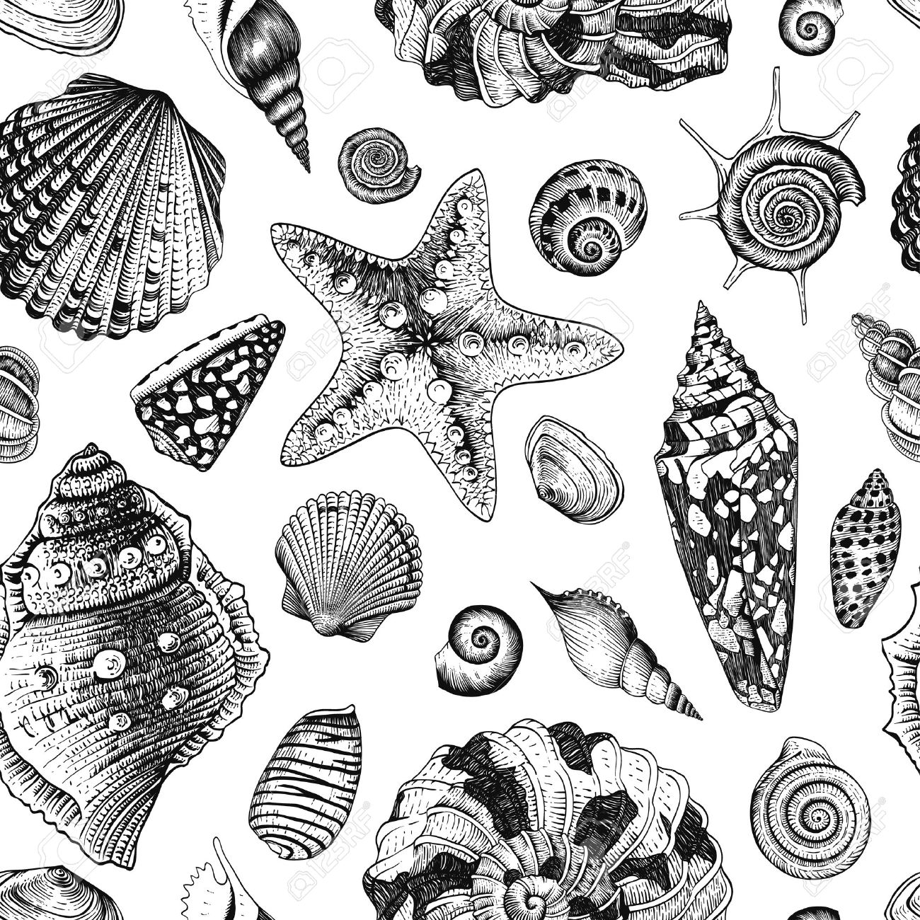Vector seamless vintage pattern with black and white seashells