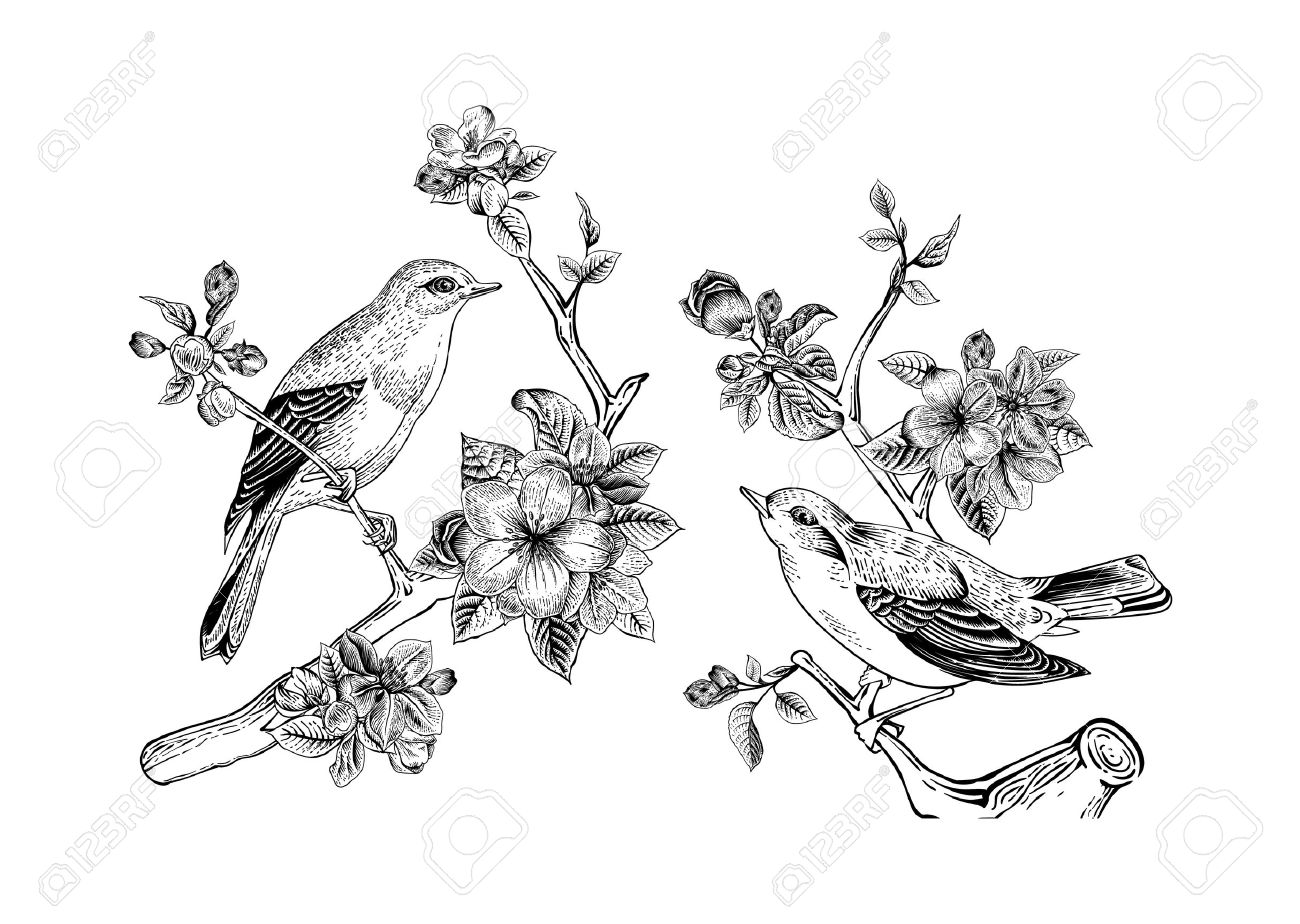 vintage vector spring card birds on a branch of apple blossoms