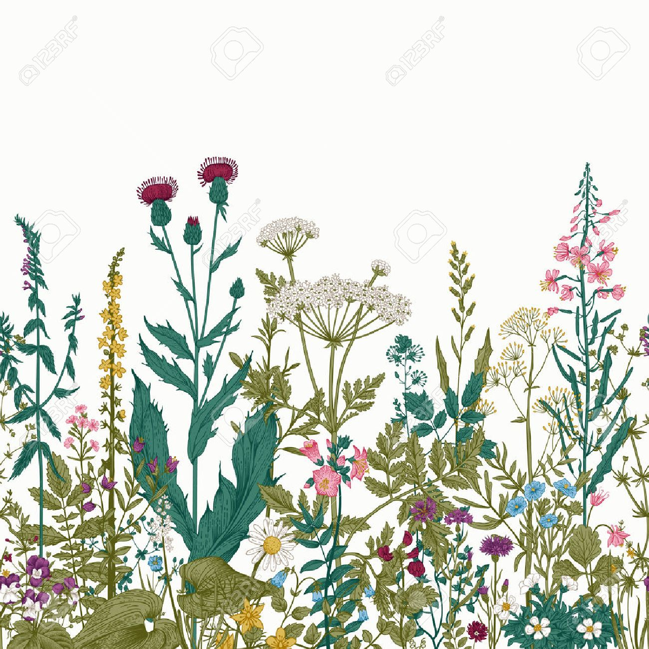 Vector seamless floral border. Herbs and wild flowers. Botanical Illustration engraving style. Colorful - 52411605