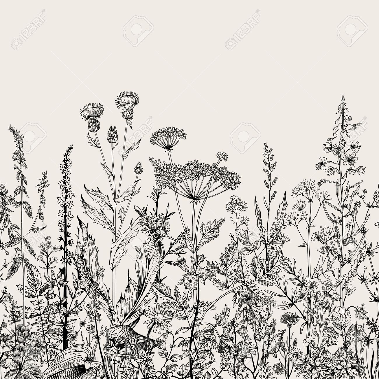 Vector seamless floral border. Herbs and wild flowers. Botanical Illustration engraving style. Black and white - 52411609