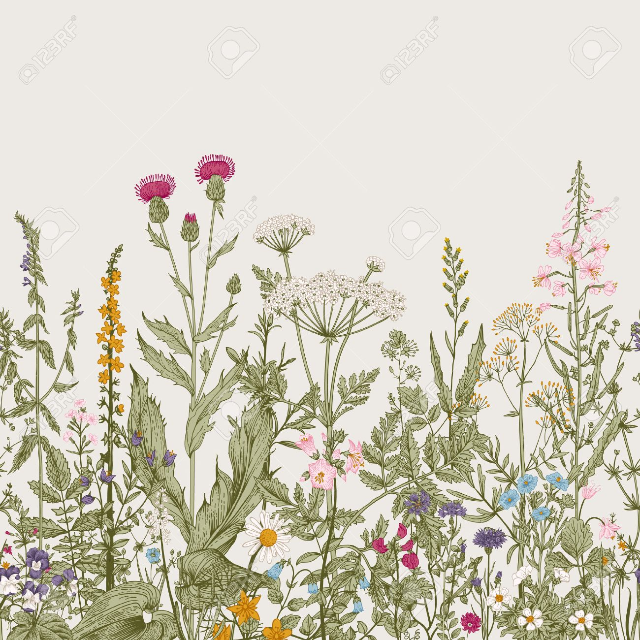 Vector seamless floral border. Herbs and wild flowers. Botanical Illustration engraving style. Colorful - 52411615
