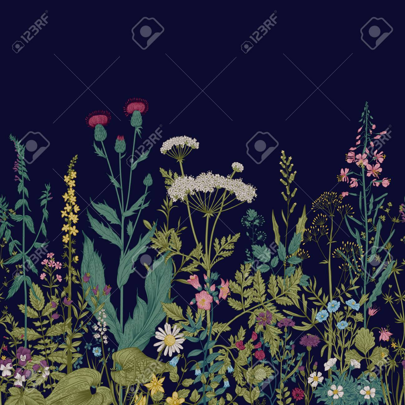 Vector seamless floral border. Herbs and wild flowers. Botanical Illustration engraving style. - 52411619