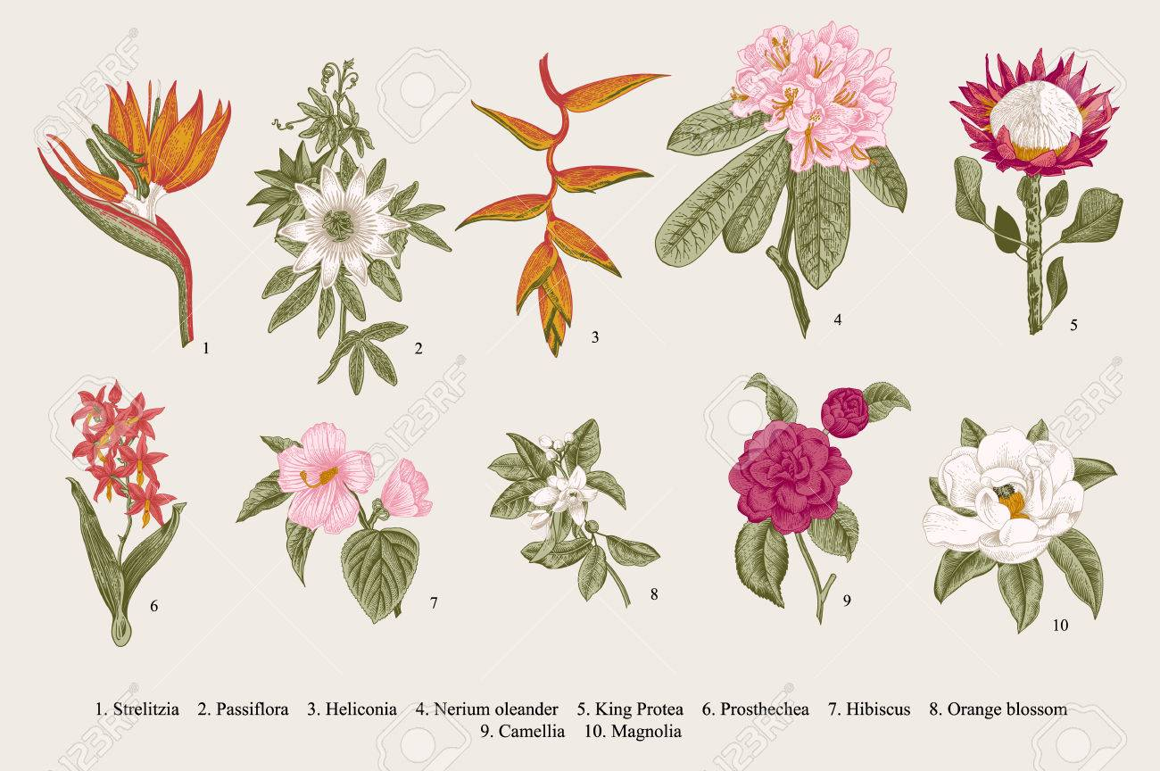 Exotic flowers set  Botanical vintage illustration