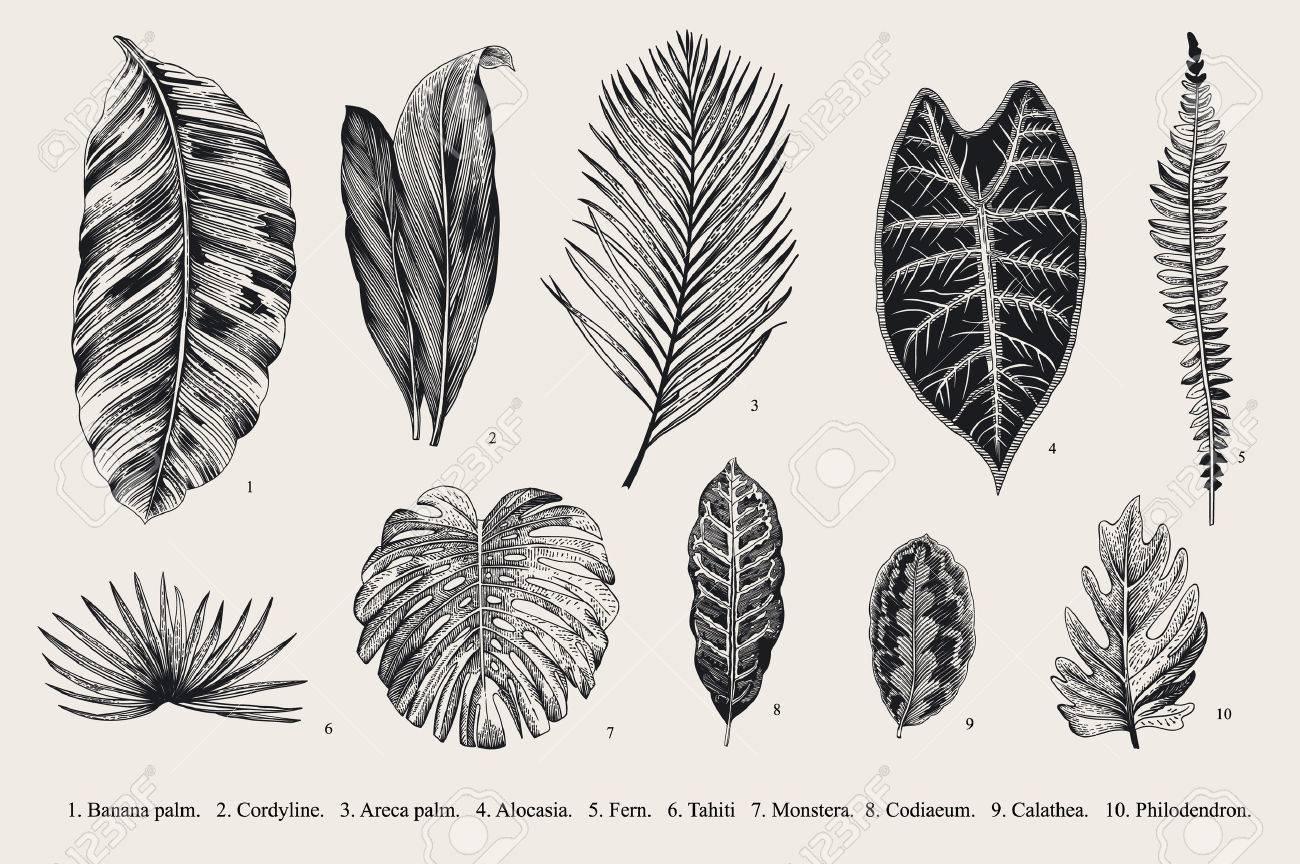 Vintage botanical illustration - 59921649