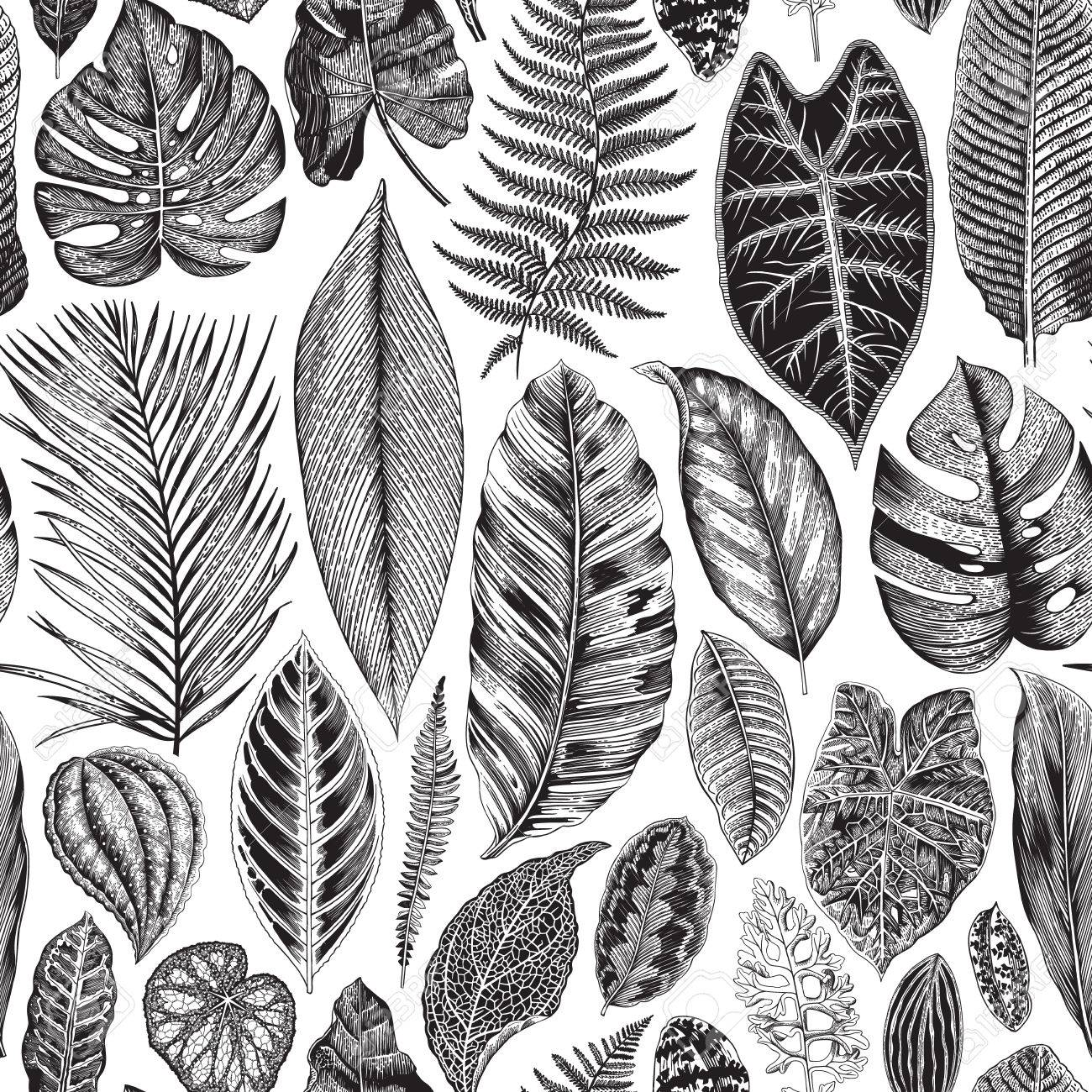 Vector seamless vintage floral pattern. Exotic leaves. Botanical classic illustration. Black and white - 68272222
