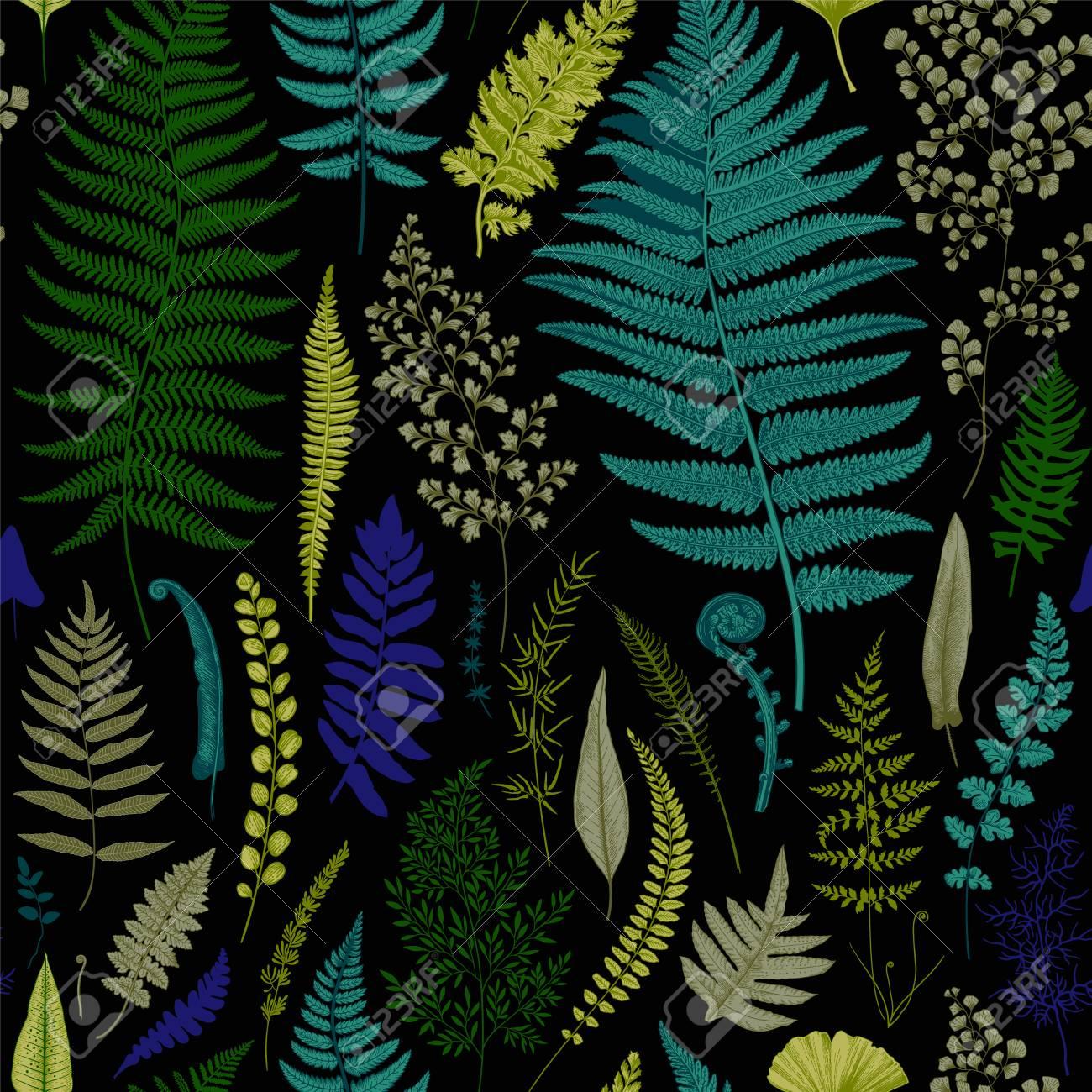 Seamless pattern. Ferns. Vintage vector botanical illustration. Vivid - 74103814
