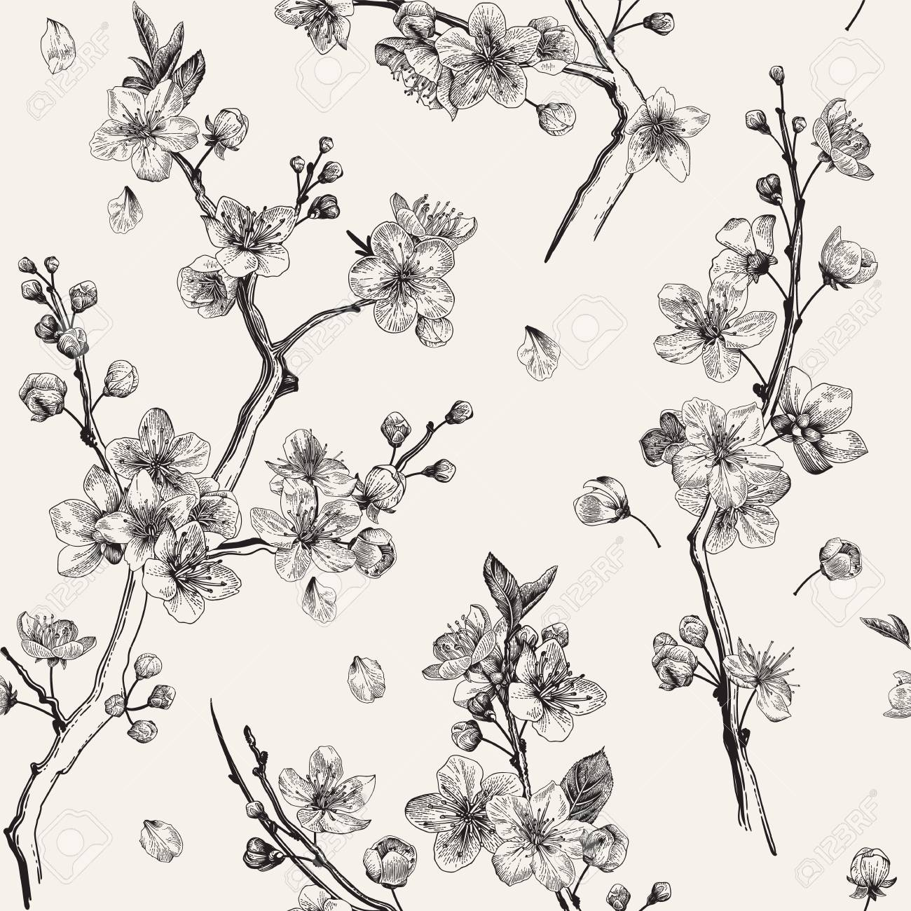Sakura. Seamless pattern. Cherry blossom branches. Vector botanical illustration. Black and white - 93216382