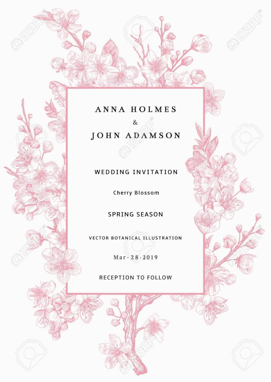Sakura. Wedding Invitation. Pink Cherry Blossom Branch. Vector ...
