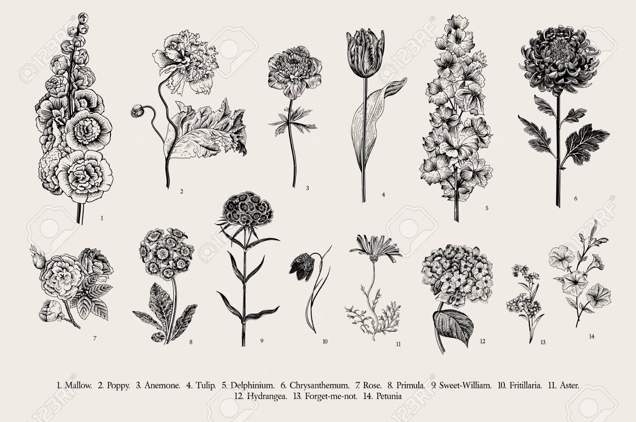 Big set flowers. Victorian garden flowers. Classical botanical vintage illustration. Black and white - 112062388