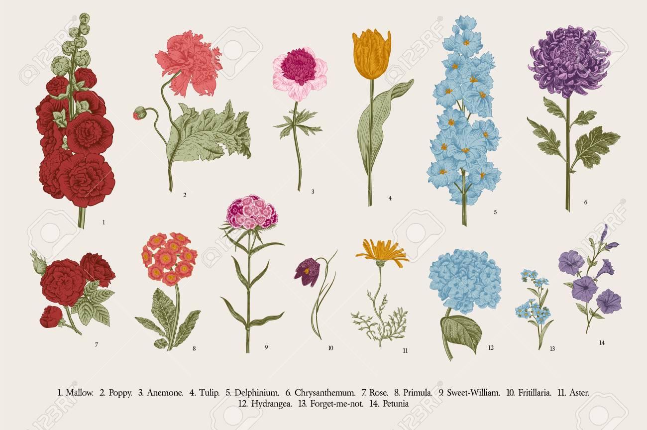 Big set flowers. Victorian garden flowers. Classical botanical vintage illustration. - 112062390