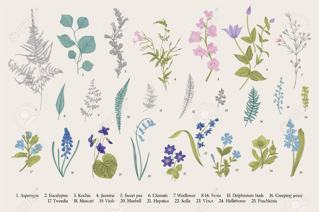 Spring Flowers And Ferns Set Vintage Vector Botanical Illustration Royalty Free Cliparts Vectors And Stock Illustration Image 122863398