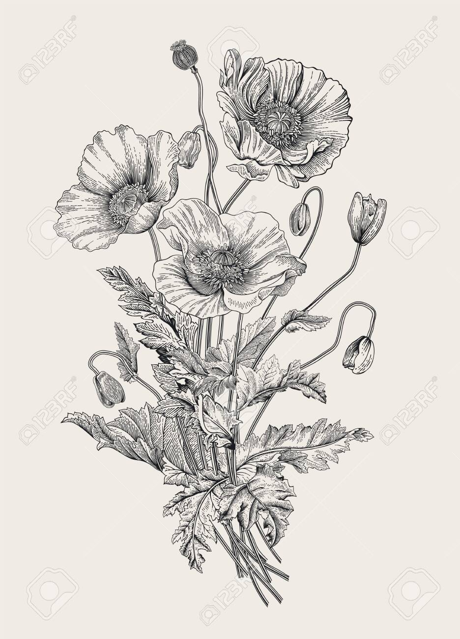 Vintage illustration. Bouquet. Poppies. Black and white - 133949846