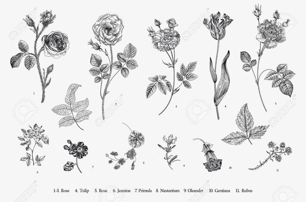 Flowers. Set. Botanical floral vector illustration. Black and white - 156556291