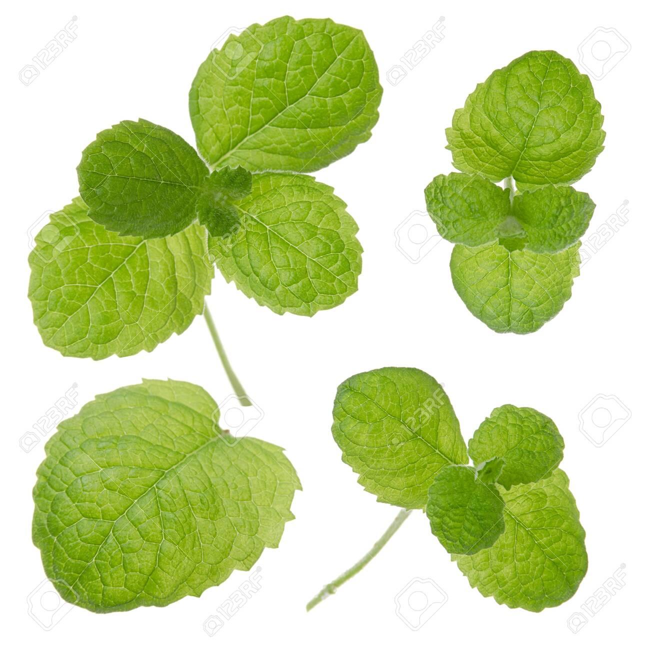 Mint fresh green leaf set isolated on white background - 139927564