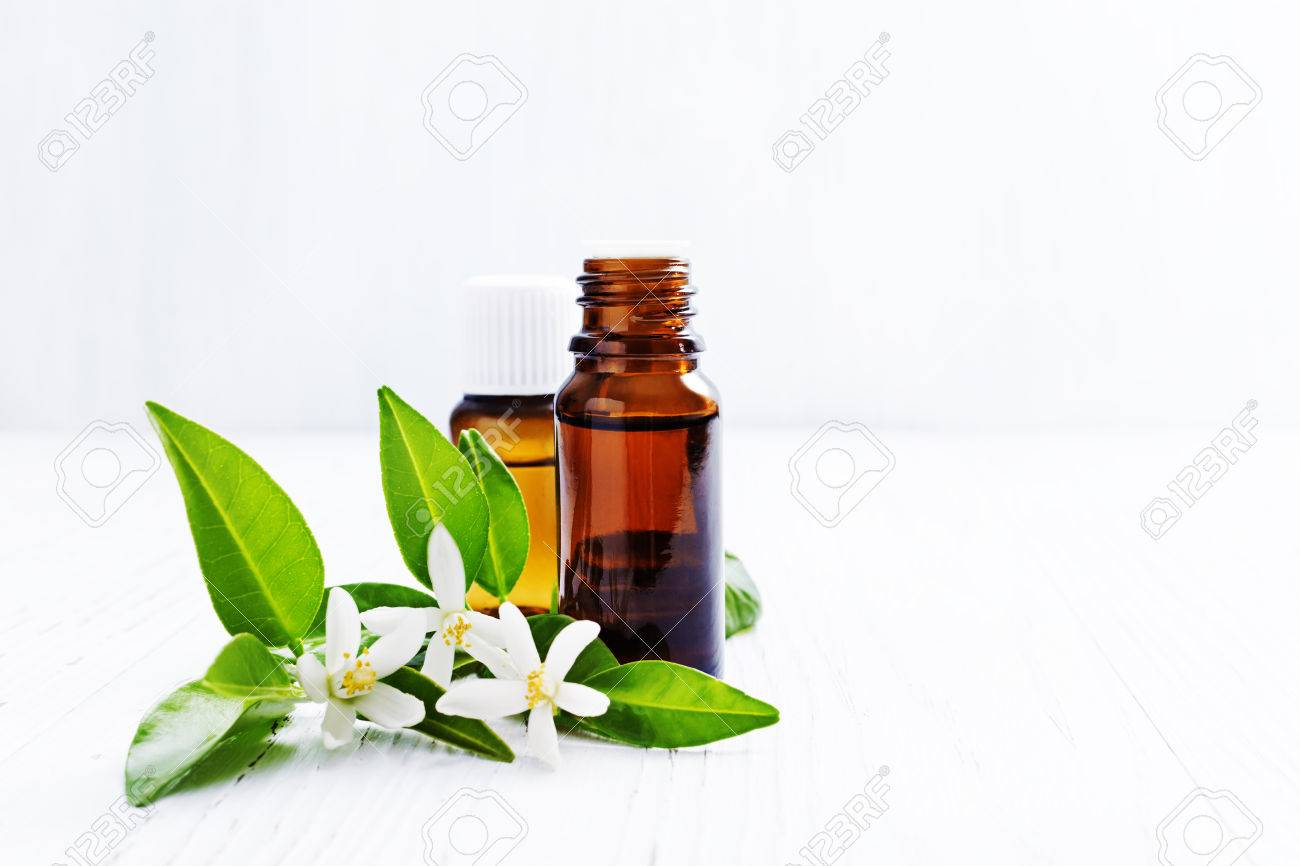 White flower analgesic oil image collections flower decoration ideas white flower analgesic oil choice image flower decoration ideas white flower medicine oil choice image flower mightylinksfo