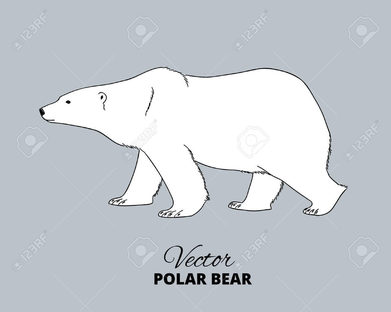 polar bear hand drawn illustration walking or stranding polar