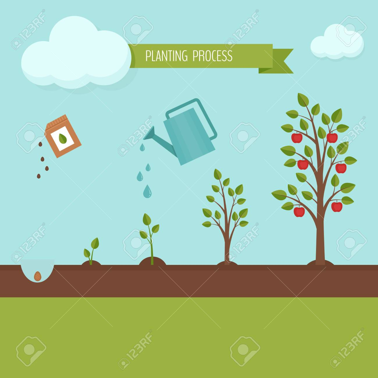 Planting tree process infographic. Apple tree growth stages. Steps of plant growth. Flat design, vector illustration. - 87468381