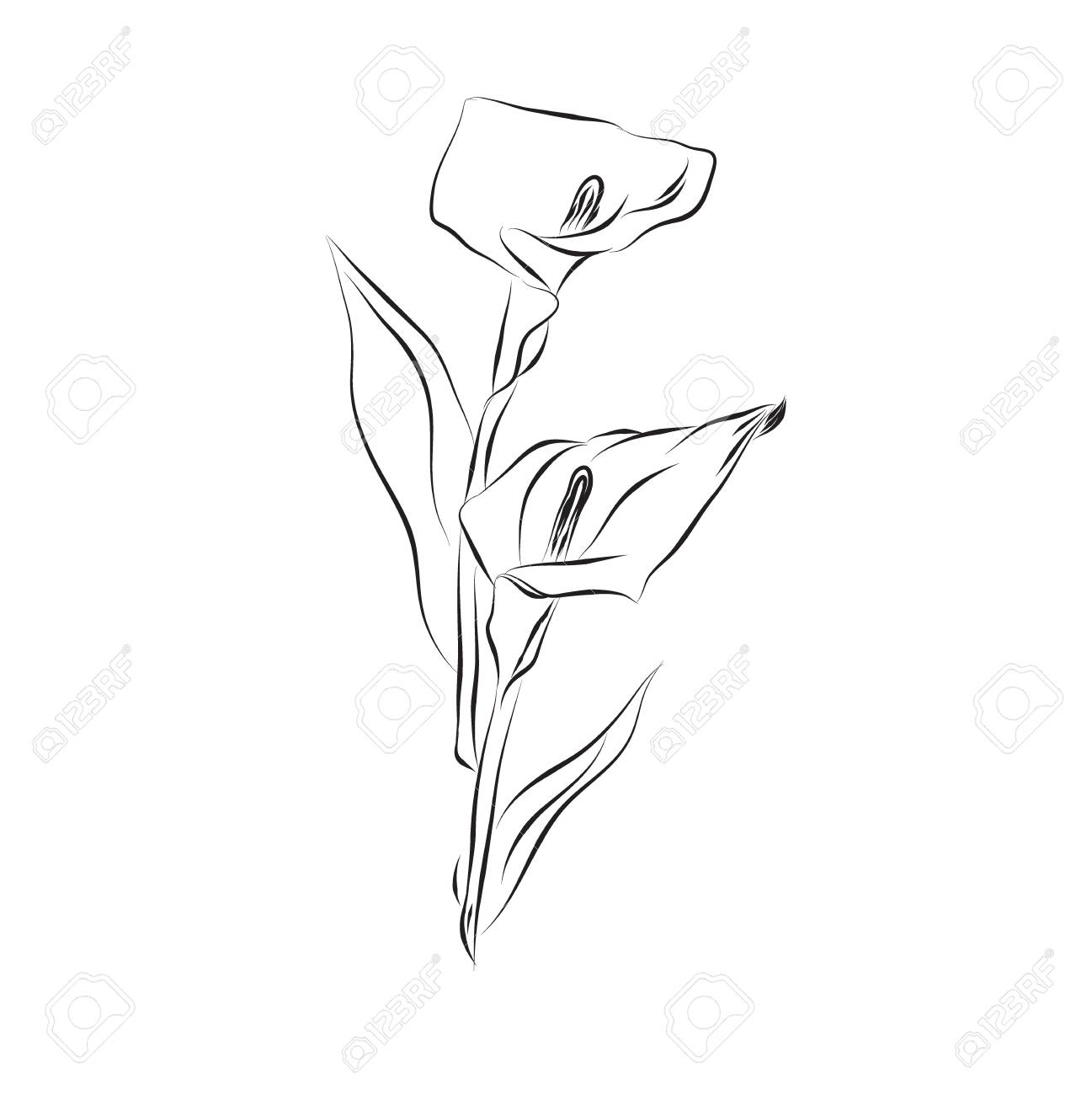 Lily Flower Sketch Design Vector Illustration Royalty Free Cliparts Vectors And Stock Illustration Image 58876108