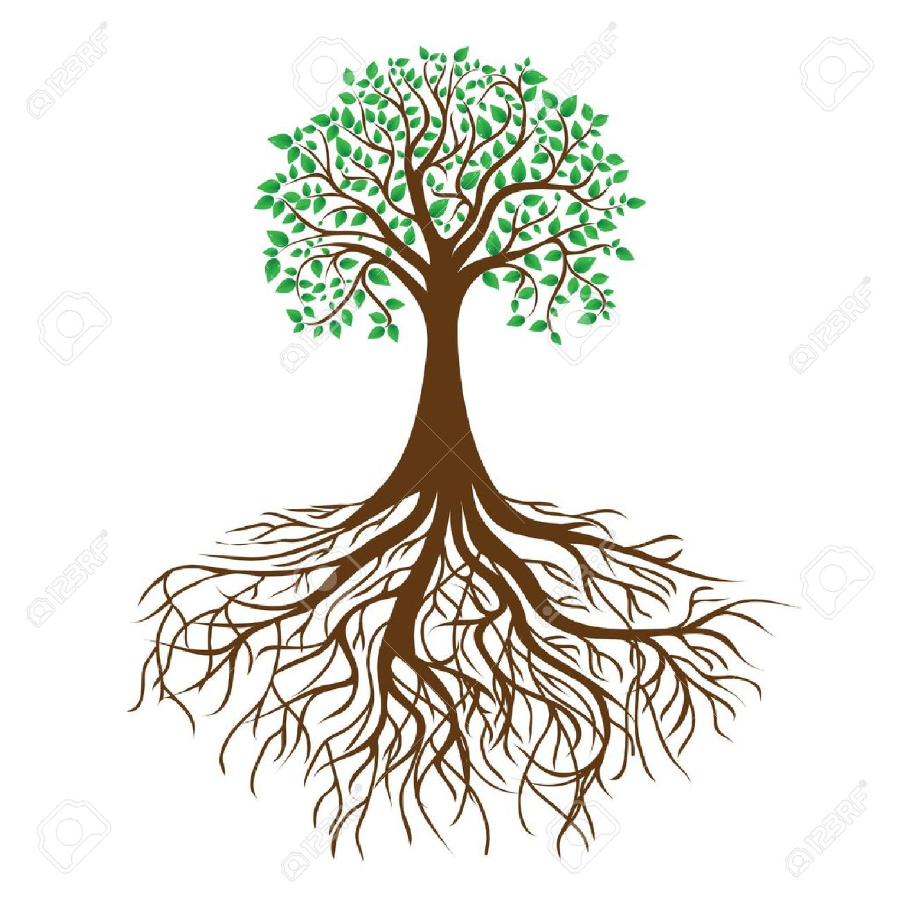 tree with roots and dense foliage Stock Vector - 13610589