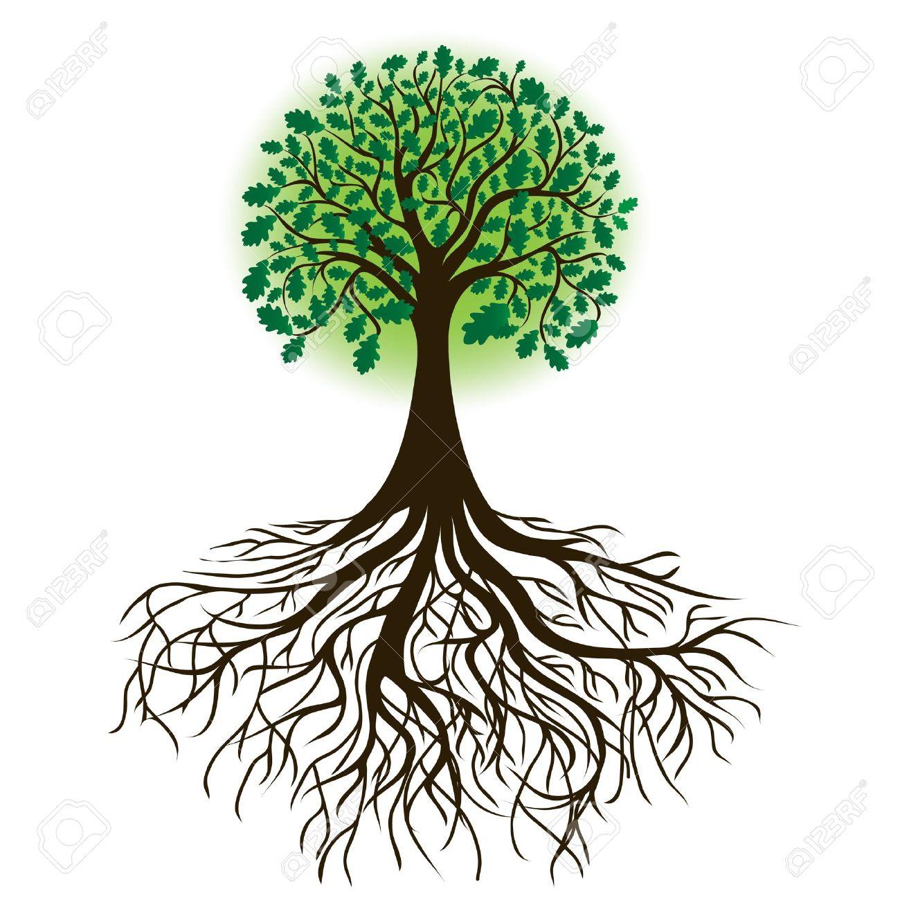 oak tree with roots and dense foliage royalty free cliparts vectors rh 123rf com oak tree vector clip art oak tree victorian boots