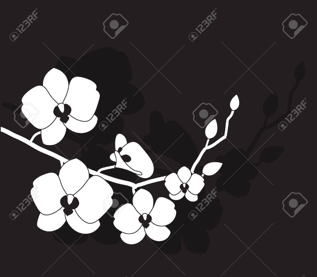 4,728 White Orchid Background Stock Vector Illustration And ...