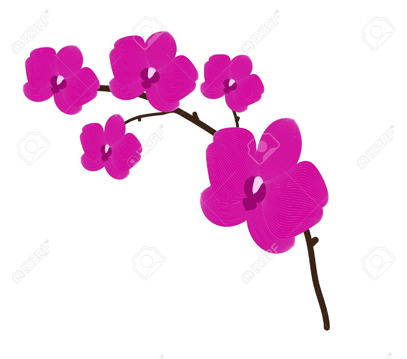 Pink Orchid Clipart