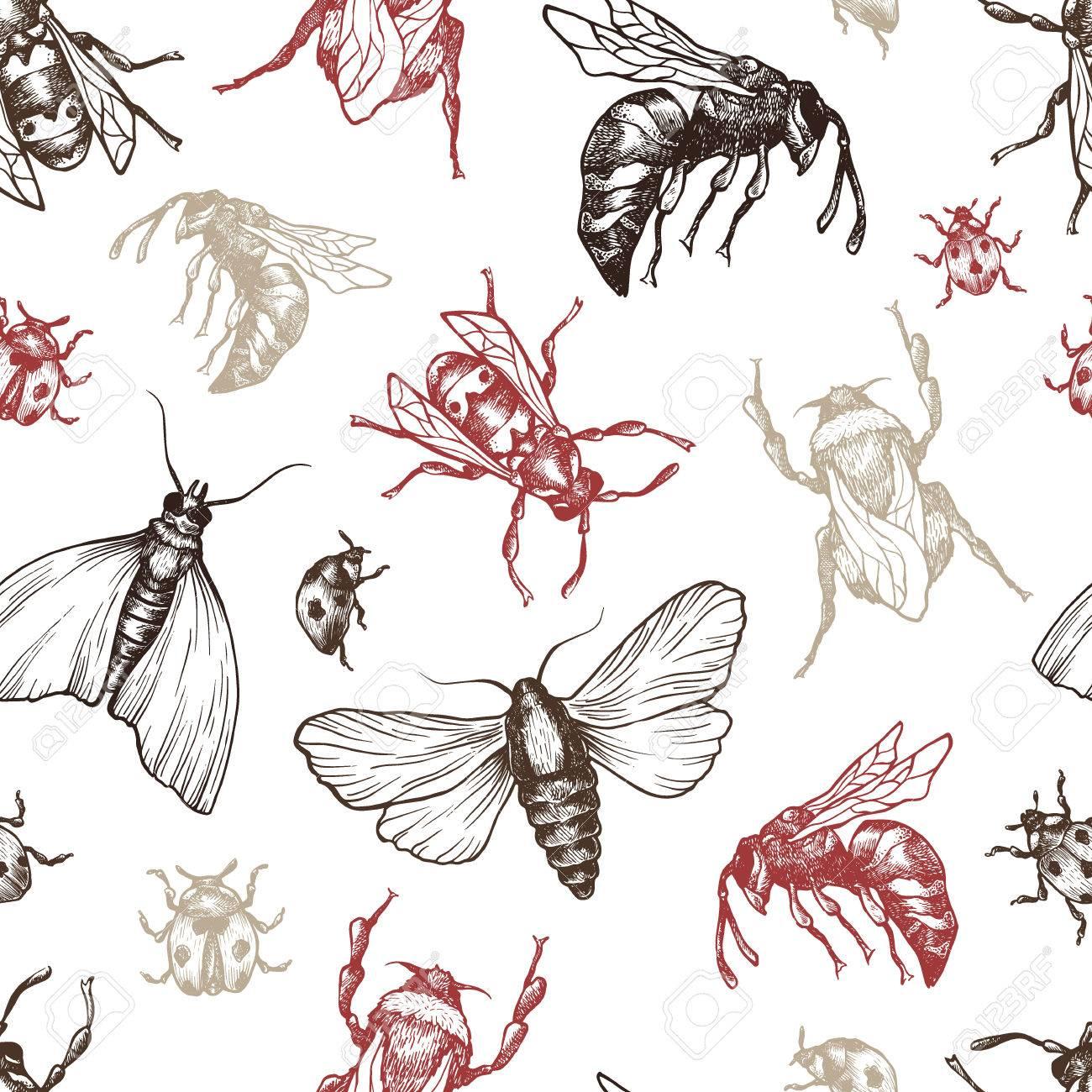 Dibujado A Mano Vector Patrón Con Los Insectos En Diferentes Poses ...