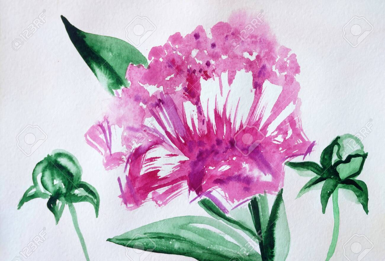 Drawing Of Bright Pink Flower Peony Green Leafs Picture Contains Stock Photo Picture And Royalty Free Image Image 125125208