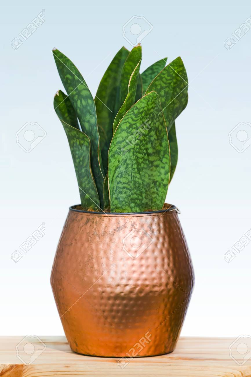 Big green plant in a beautiful copper flower pot isolated on a white background & Big Green Plant In A Beautiful Copper Flower Pot Isolated On ...