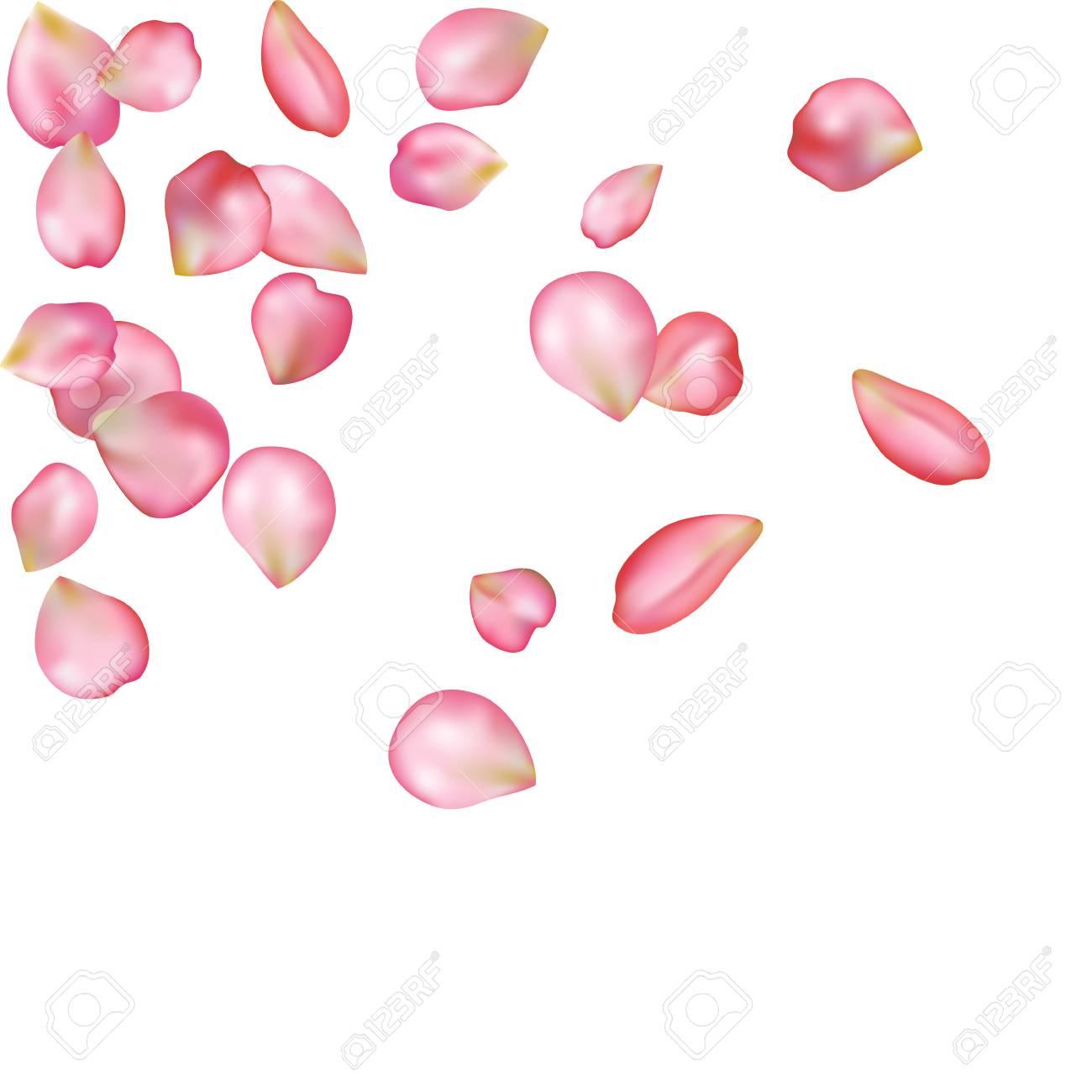 Spring flower petals blossoms blank background template royalty spring flower petals blossoms blank background template stock vector 76556846 mightylinksfo