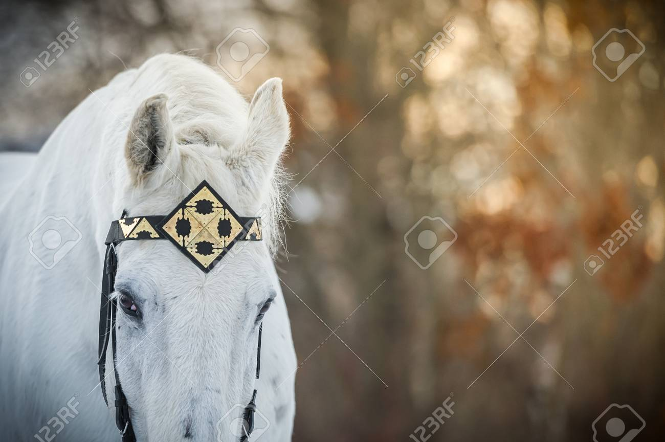 Cheval de trotteur blanc en bride de bride
