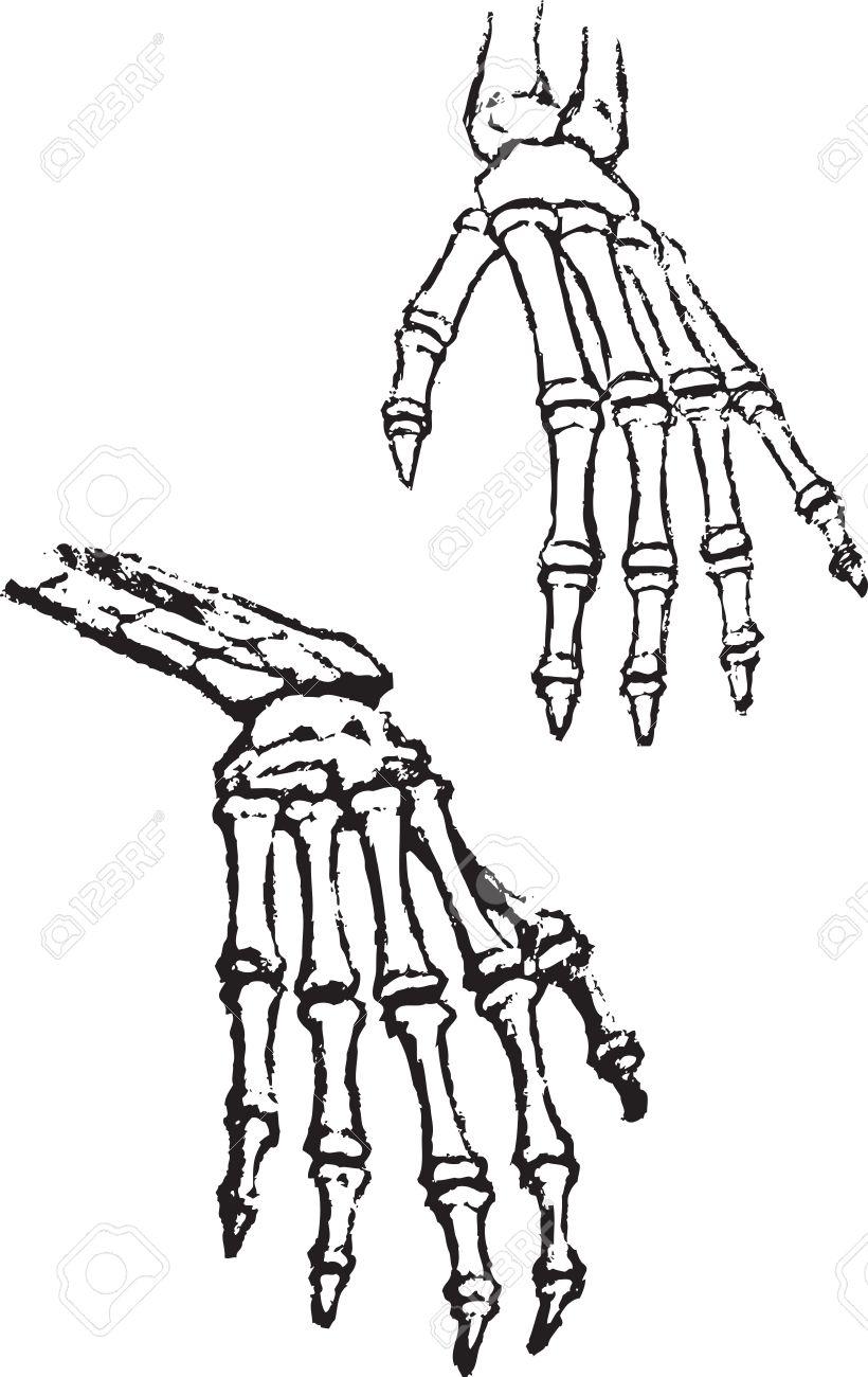 Skeleton Hands Vector Bone Anatomy Human Black Sketch Drawing Image ...