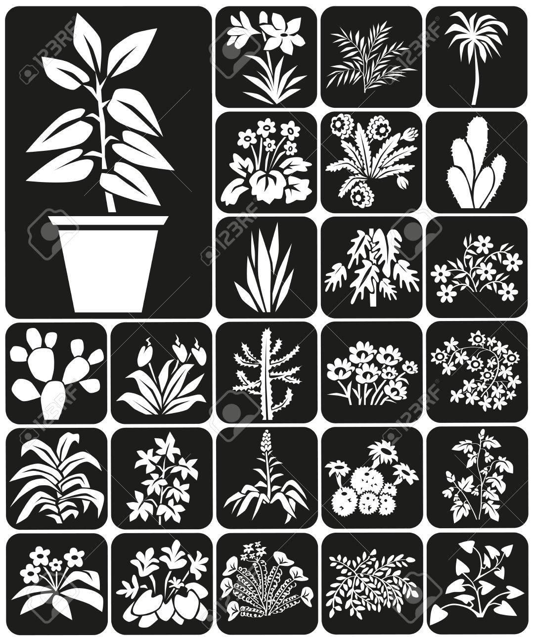 Icones Blanches Sur Fond Noir Les Plantes D Interieur Et De Fleurs