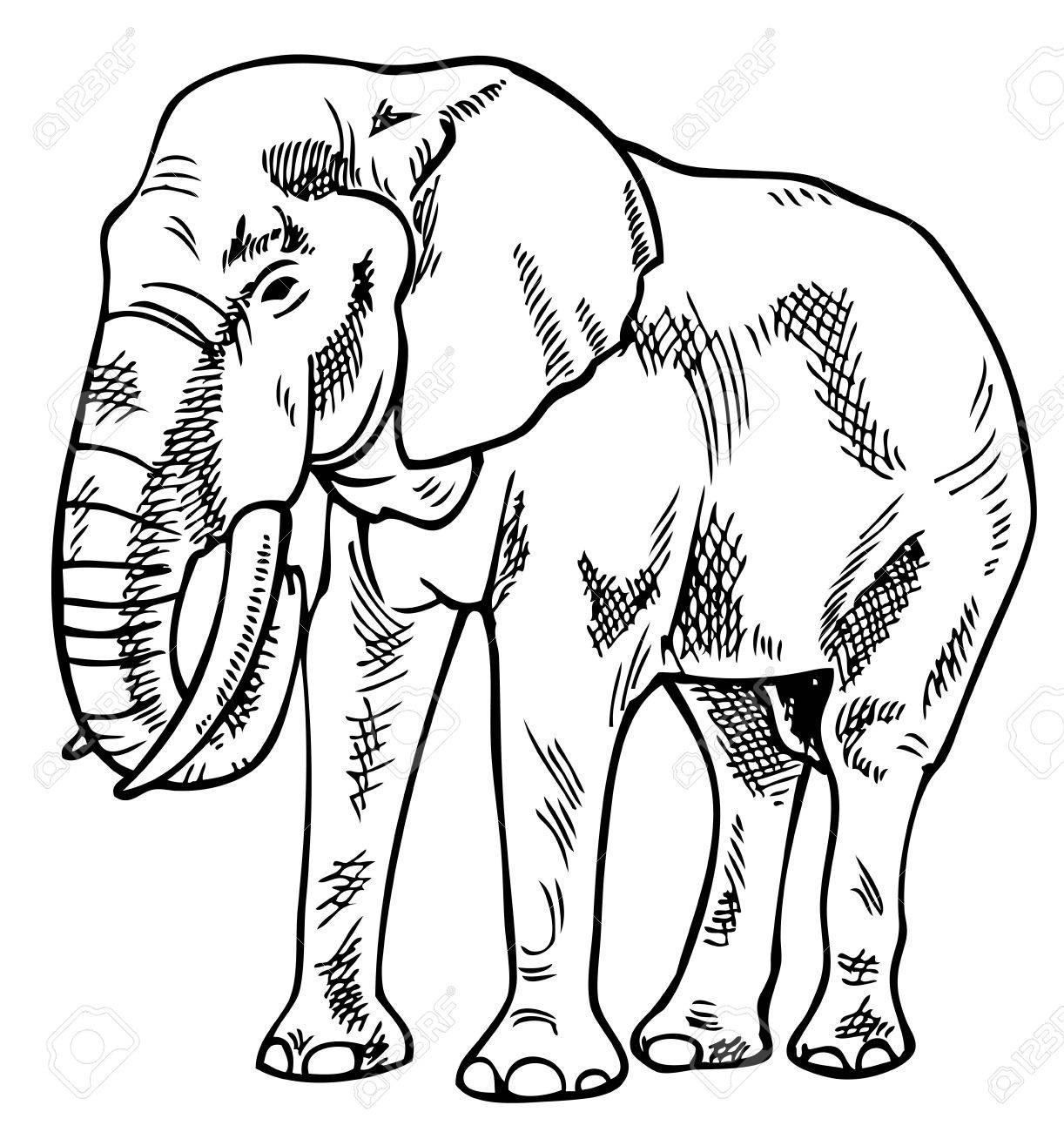Dessin D Un Éléphant dessin d'un éléphant sur un fond blanc clip art libres de droits