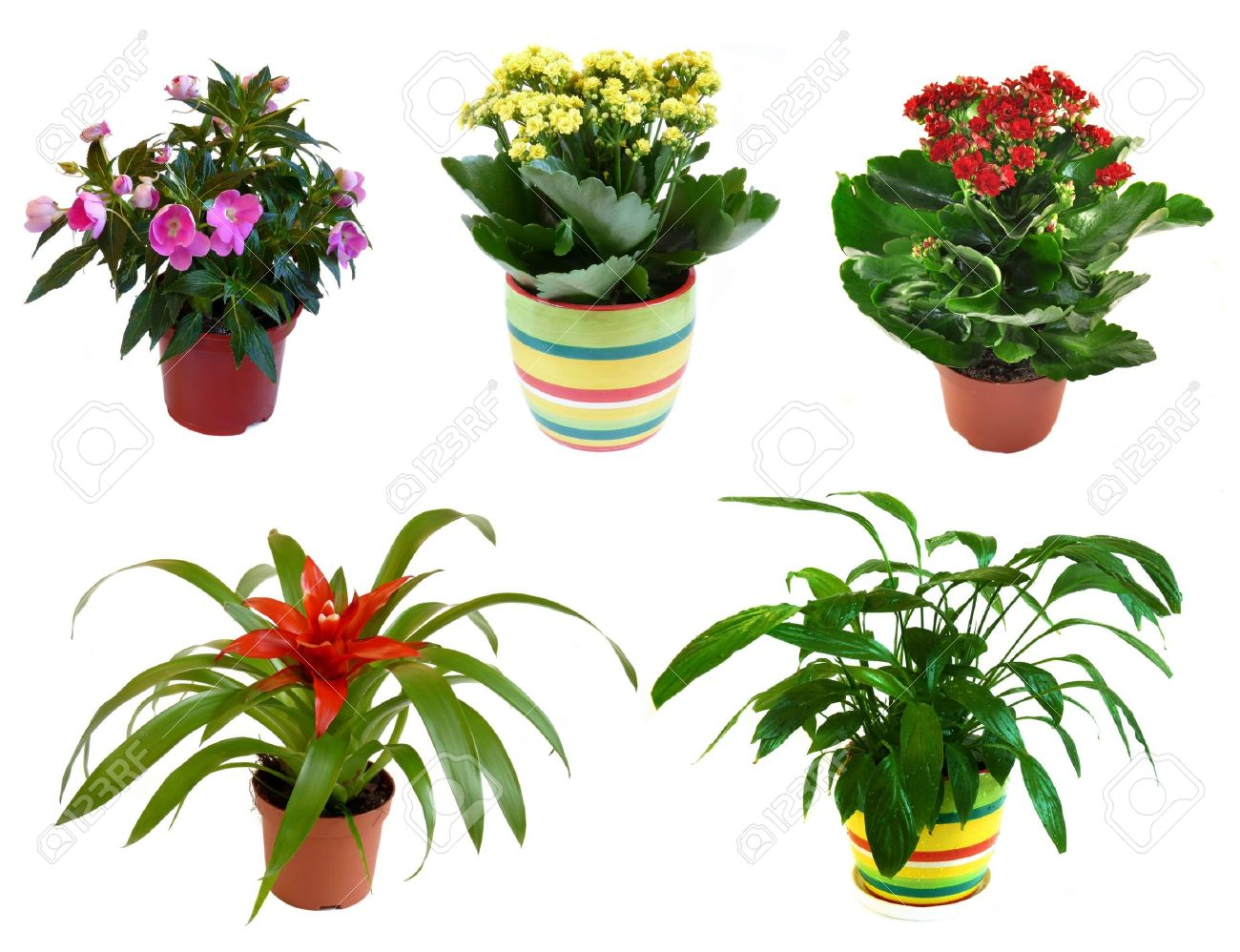 Potted flowers isolated on white background, collage - 10712822