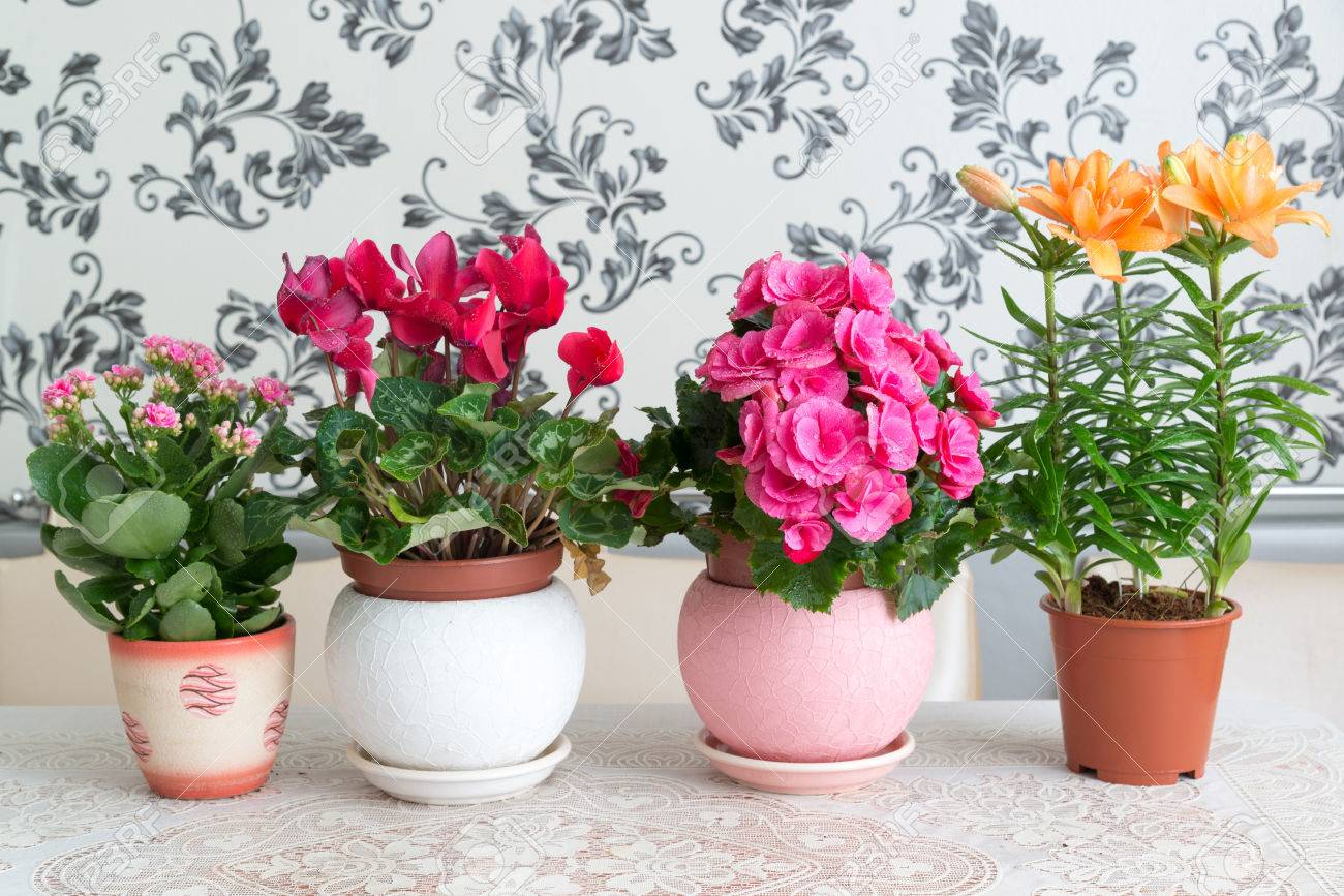 Several potted flowers are on the table in the room Stock Photo - 65242425 & Several Potted Flowers Are On The Table In The Room Stock Photo ...
