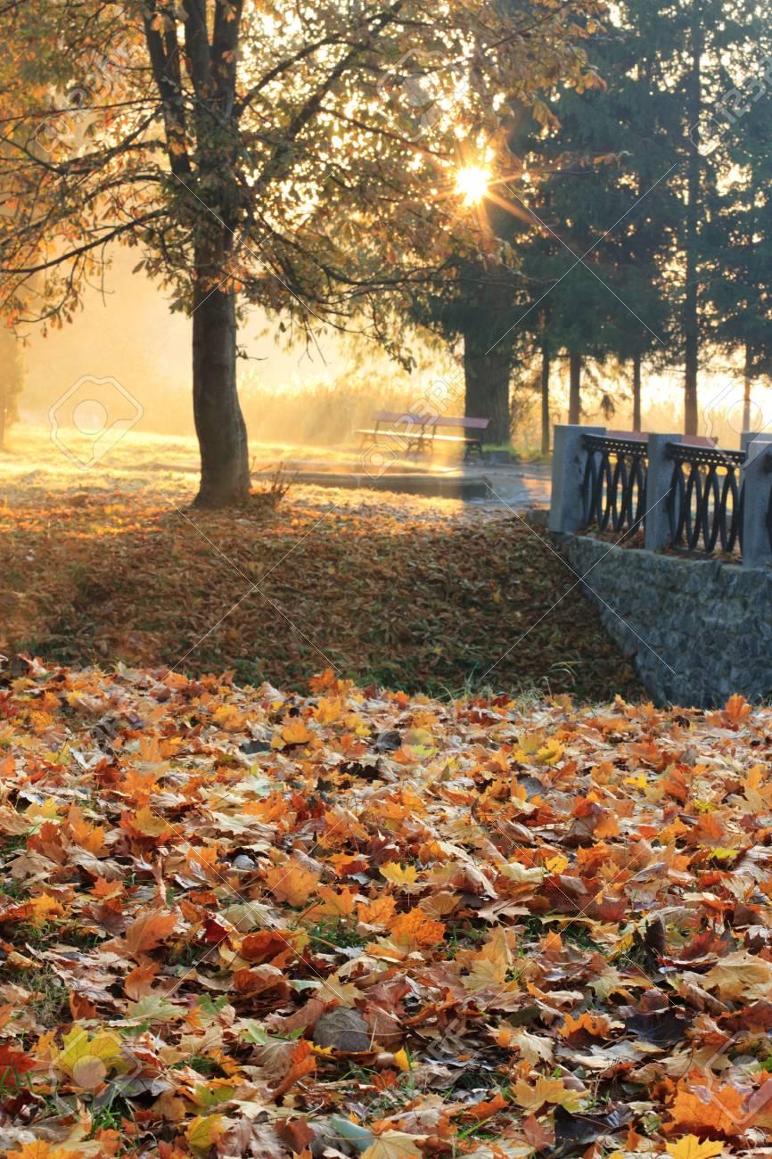 Wonderful sunrise in the park Stock Photo - 13034192