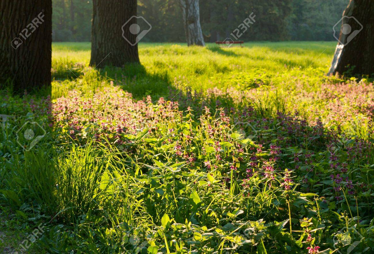 Beautiful scenery with old trees and flowers Stock Photo - 13636798