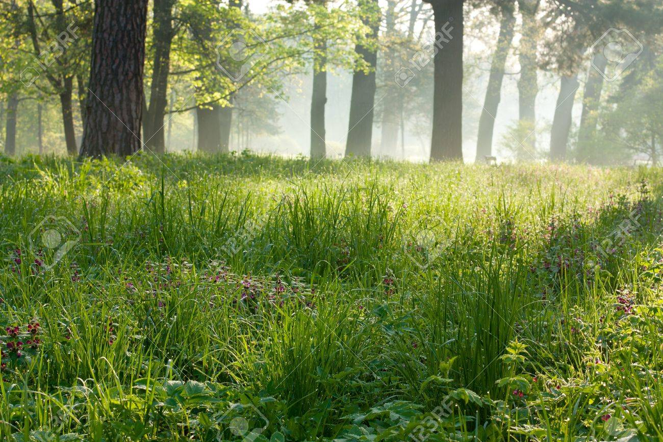 Peaceful Foggy Morning In The Park. Landscapes Stock Photo ...