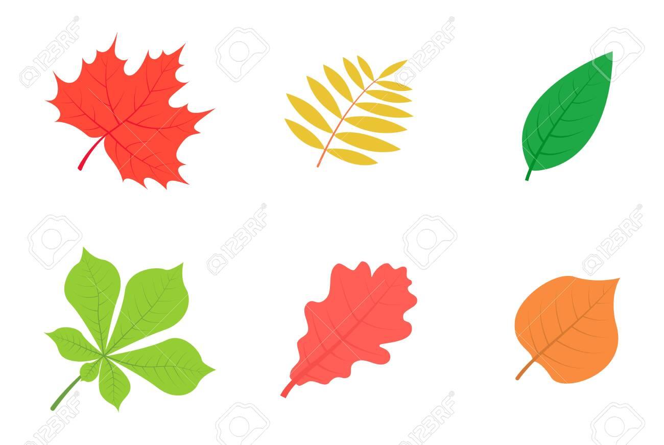 Set of autumn leaves isolated on white background. - 154899791